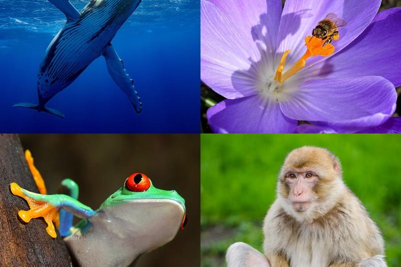GSSST Science Club: International Day for Biological Diversity